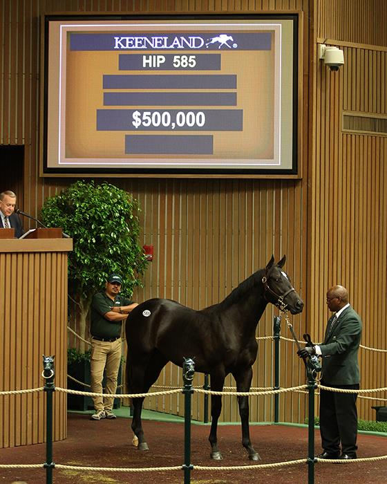 Creative Cause S First Keeneland Yearling Sells For 500 000